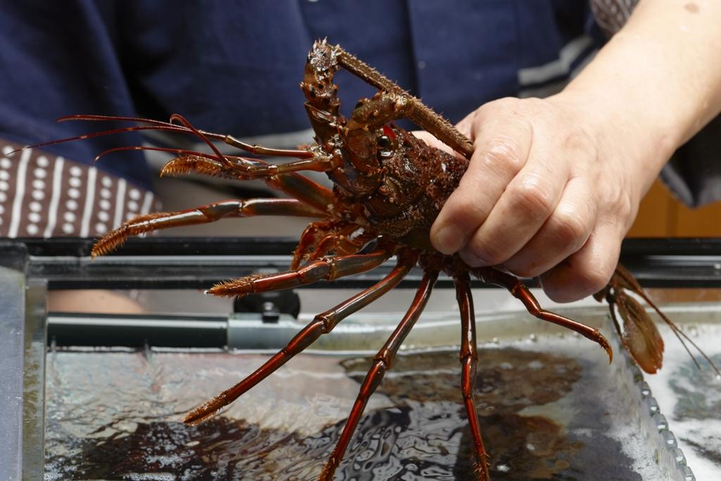 Fresh seafood from Katsuura and Sotobo